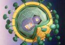 Mida näitab HIV-test?
