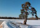 Eesti külma- ja soojarekordid