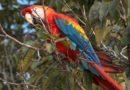 Miks papagoid räägivad?