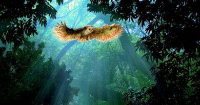 Mida linnud meile unes öelda tahavad