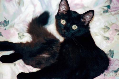 Nurri12-2001